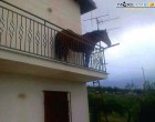 Agrigento. Che ci fa un cavallo sul balcone? Strana storia, tutta vera, da Burgio