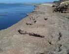 Portopalo, stagione turistica con previsioni negative