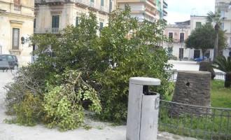 Avola. Tromba d'aria si abbatte in città, sradicato albero in piazza Umberto I