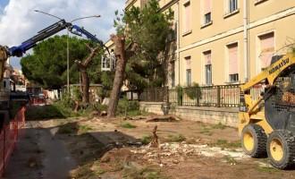 Avola. Rimossi gli alberi in via D'Agata Micale, verranno posizionati altrove