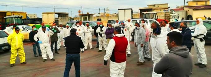 Contadini di bianco vestiti… Nella Patria del ciliegino gli agricoltori combattono il virus